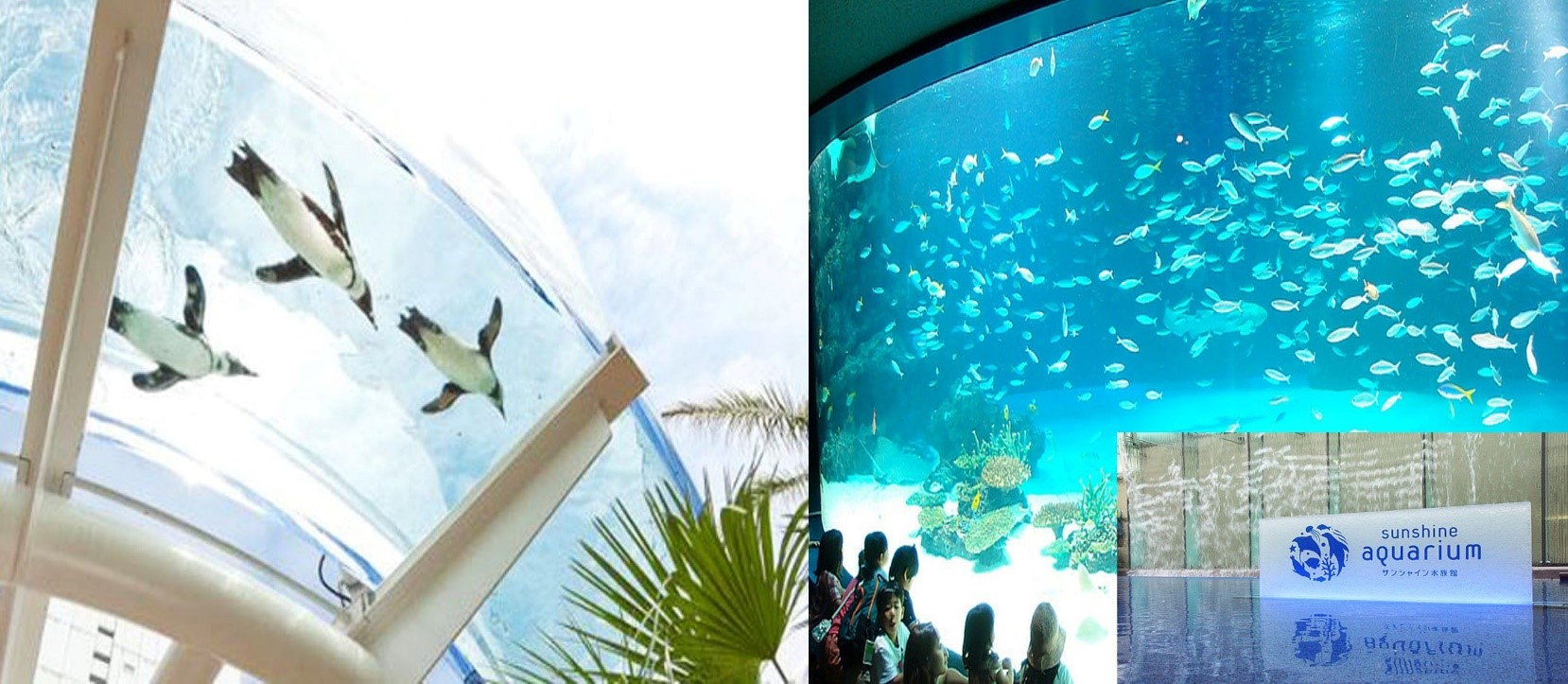 One Stop Transfer: Tokyo City to Sunshine Aquarium