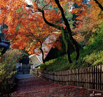 Kyushu.Saga City