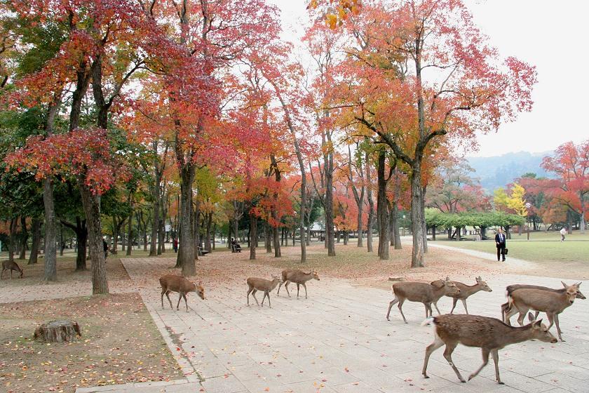 Nara.Nara City