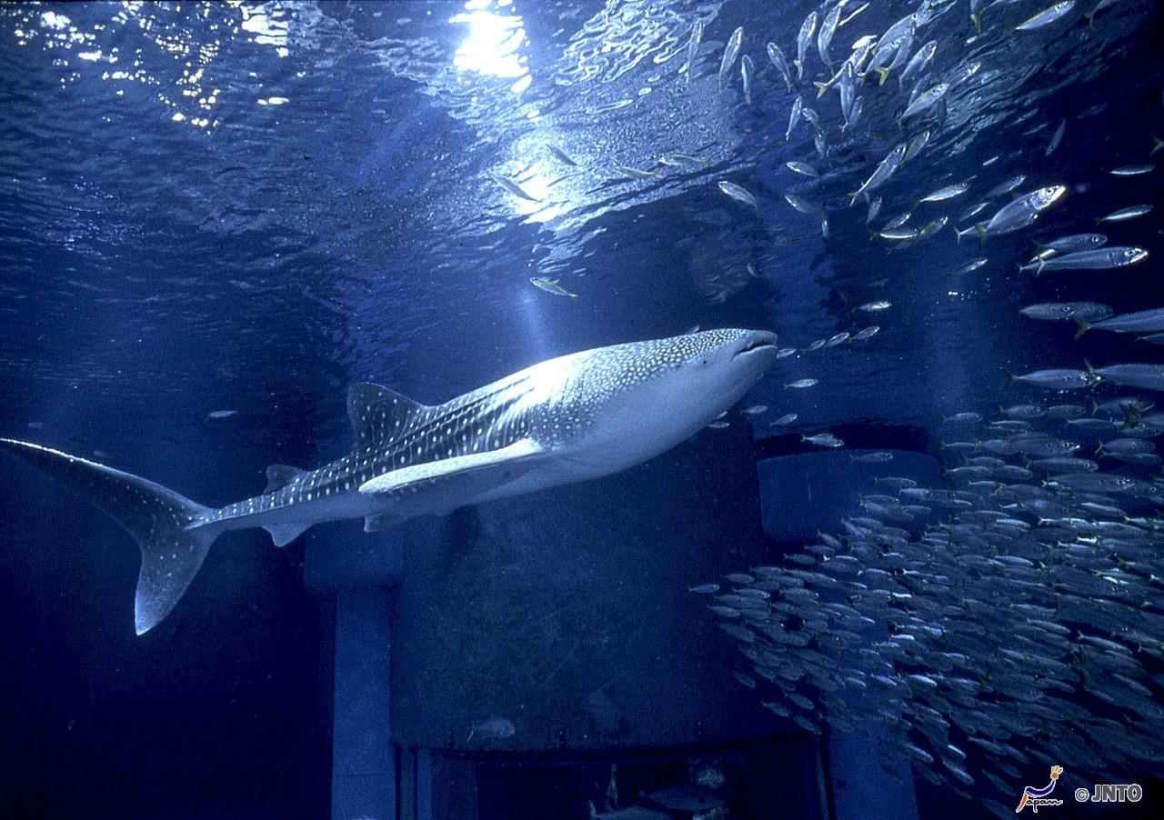 Osaka Aquarium Kaiyukan *1shortTrip*.Osaka