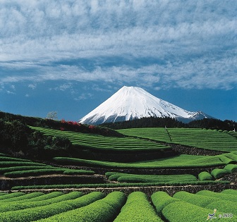 (1) Walk around 2 Mt. Fuji Photo Spots & Mini Tea Ceremony Experience   (2) Ninja Bus Water Spider