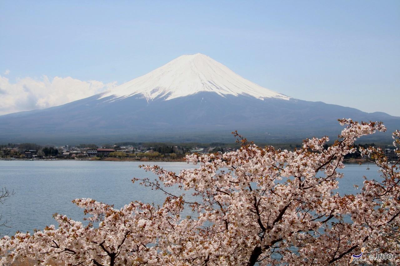 (1) Asagiri Kogen Paragliding Experience near Mt. Fuji   (2) Mt. Fuji Area Chartered Taxi Sightseeing Plan