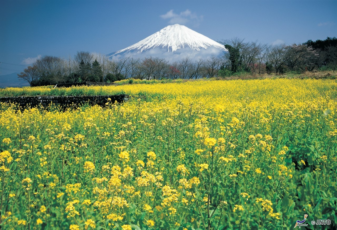 [By Bus Tour]8D7N. Economy Class. Tokyo 2N, Lake Kawaguchi 1N, Takayama 2N & Kyoto 2N. Golden Route (From Tokyo back to Kyoto) **Wai Wai Real Japan
