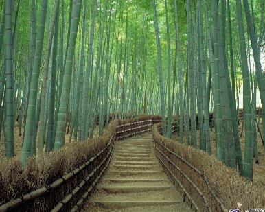 Sagano Bamboo Grove & Arashiyama Walking Tour without Yakatabune Lunch Cruise / with Yakatabune Lunch Cruise