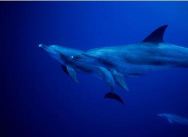 (1) Battleship Island Gunkanjima Cruise & Landing   (2) Dolphin Watching in Amakusa, Kumamoto