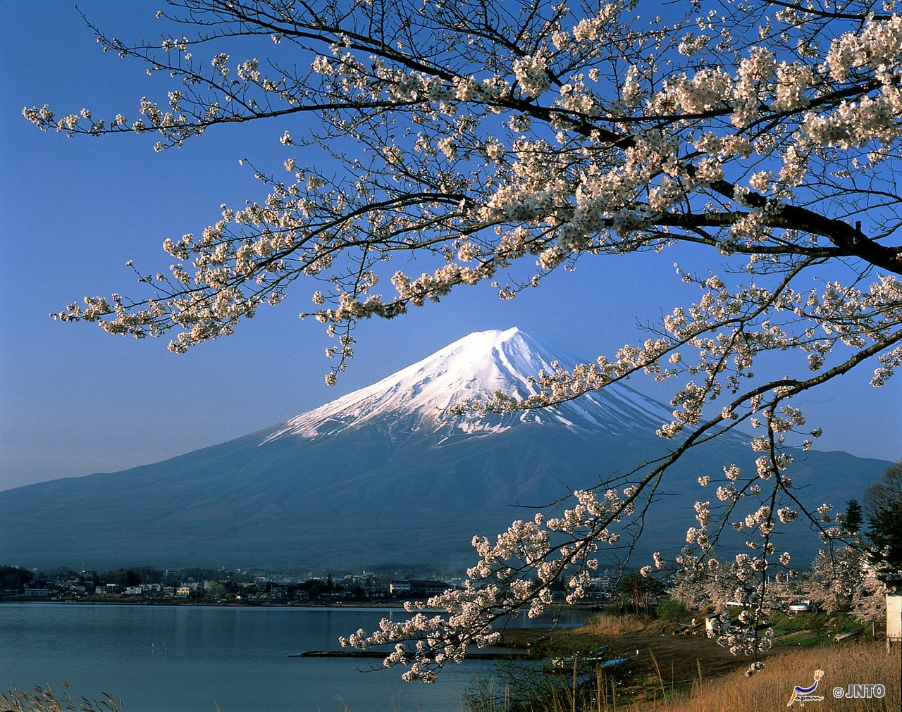 [By Bus]3D2N. Tokyo→Mt. Fuji 5th Sta., Hida Takayama, Lake Kawaguchiko→Tokyo [TT20]