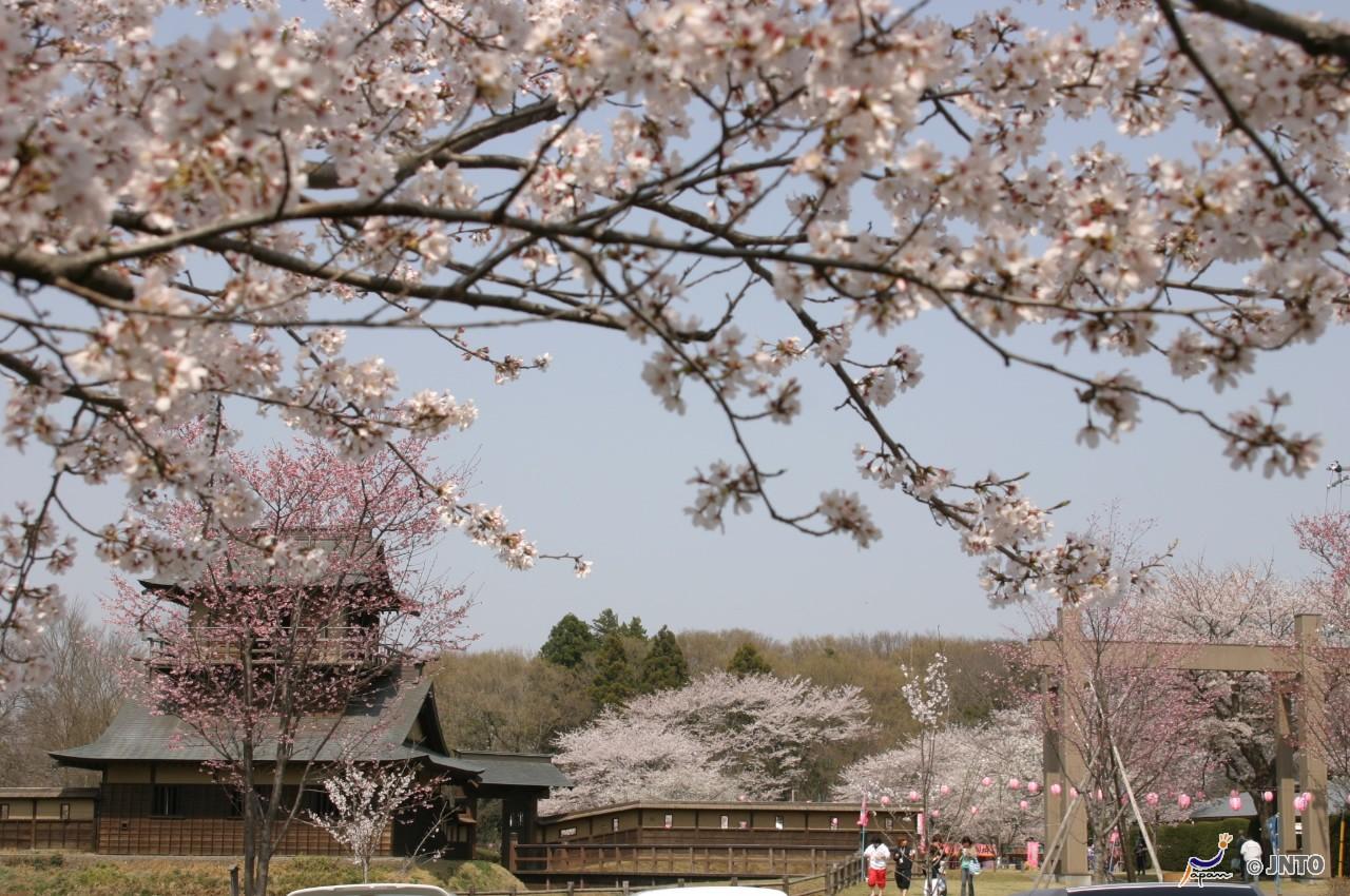 Ibaraki.Mito City