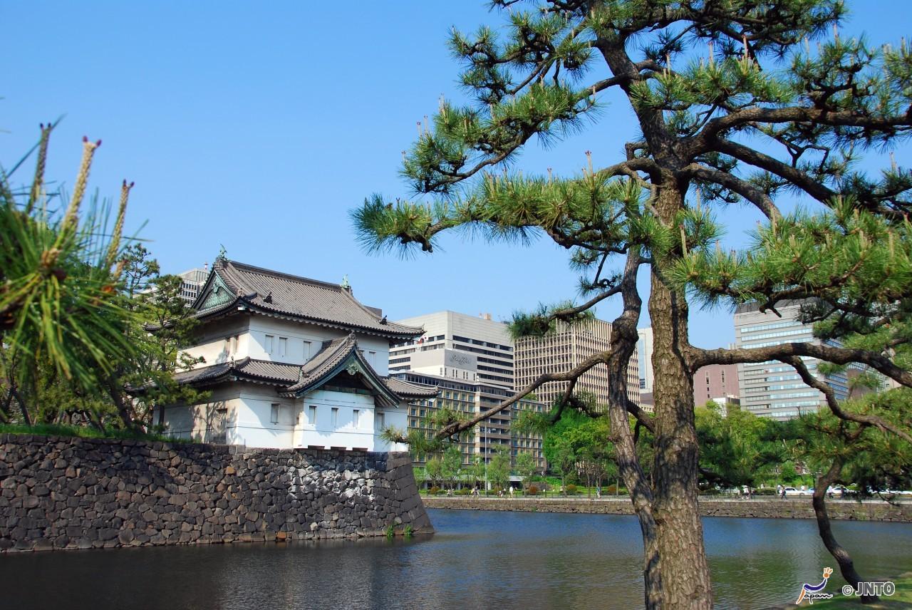 Tokyo Half Day Drive Cruising City Tour *DAISUKI