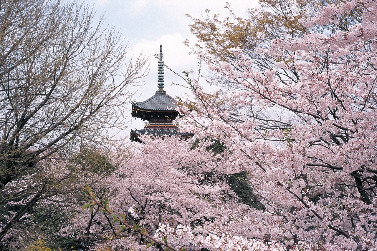 6-Day Japan Combination Package [B]