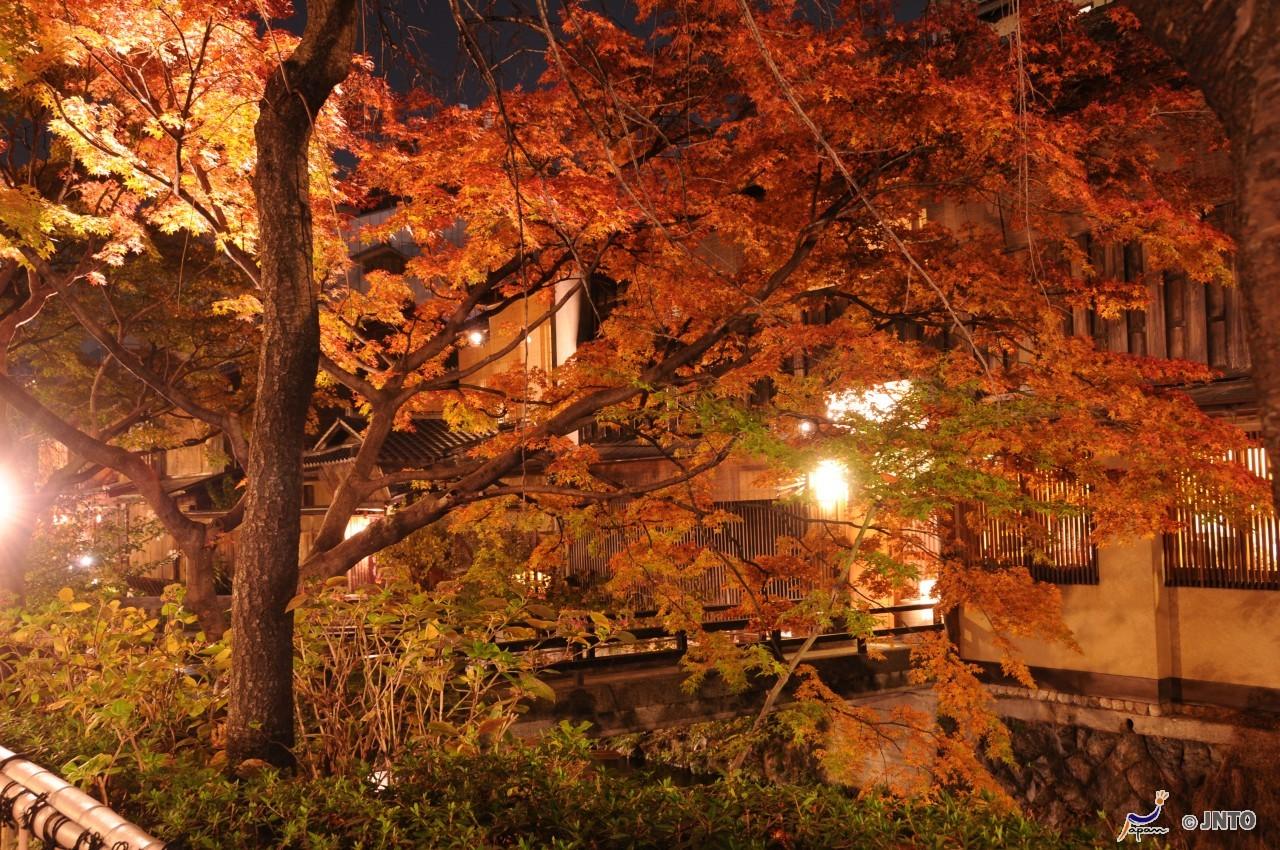 3D2N.Kyoto. Kyoto Tokyu Hotel . + half day DAISUKI.Kyoto Tour **ALPHA MAGIC 20