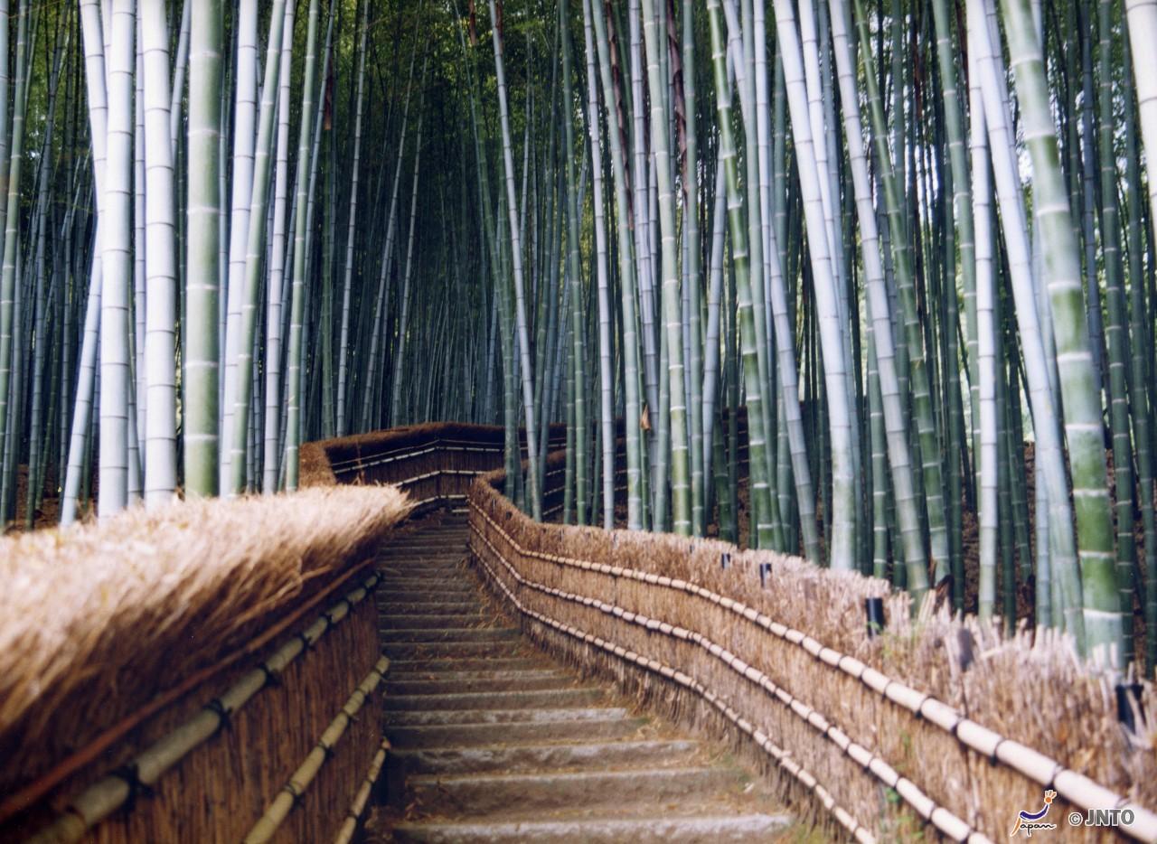 4D3N.Kyoto. Kyoto Tokyu Hotel. Free & Easy **ALPHA MAGIC 20