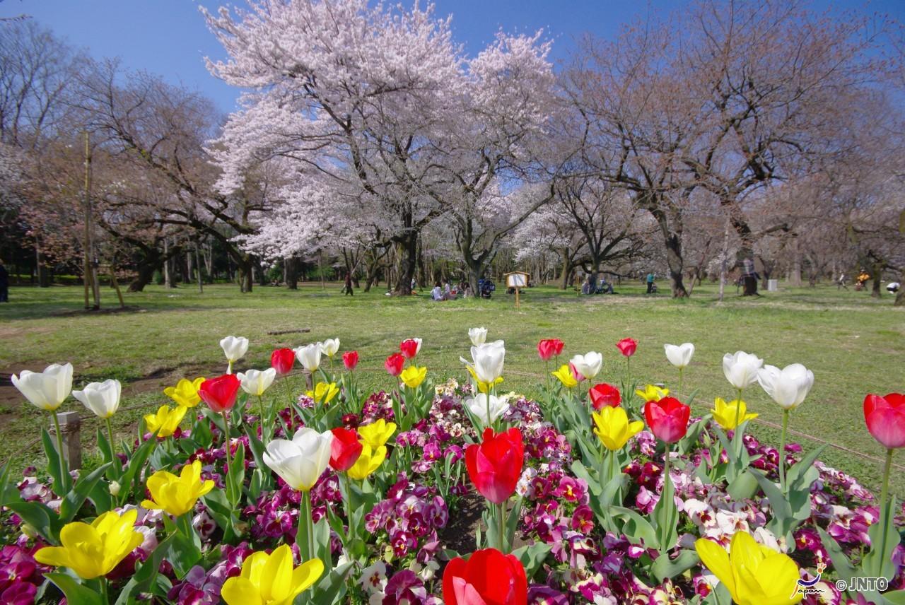 Kamakura City to Haneda Airport Shared Transfer ( Cherry Tomato ).