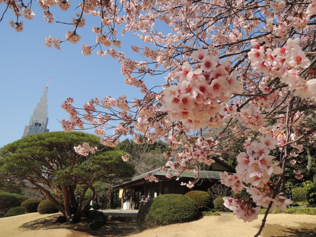[By Bus] 1Day. Nara Cherry Blossom. Lunch *ALInoBABY