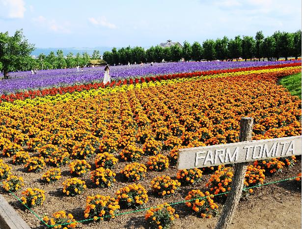 Hokkaido Chuo Bus – Furano and Biei – A Tale of Four Seasons Tour