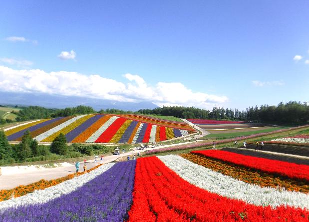 Hokkaido Chuo Bus – Furano Lavender Story Tour