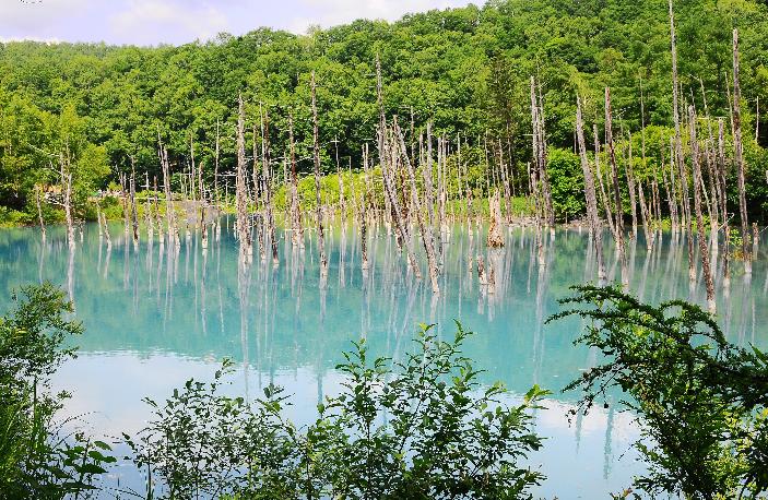 Hokkaido Chuo Bus – Highland Furano, Farm Tomita, Shikisai-no-Oka and Blue Pond Tour