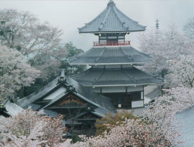 Nara Cherry Blossom Viewing Tour at World Heritage Site Mount Yoshino *ALInoBABY