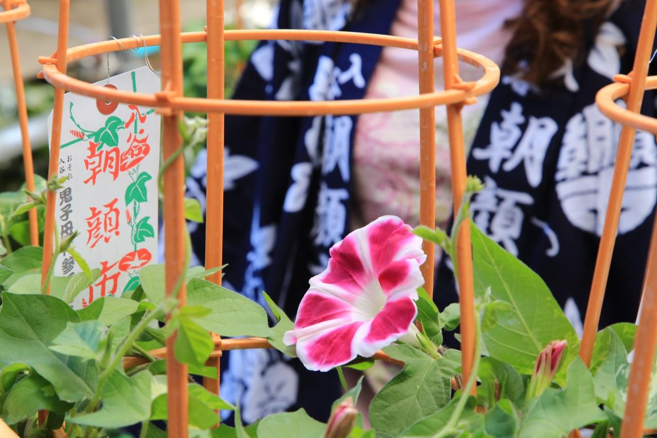 Saga City to Genkai-cho, Higashimatsuura-gun [Saga Pref.] Shared Transfer ( Cherry Tomato ).