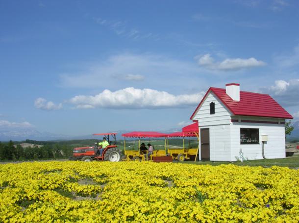 Hokkaido Chuo Bus - Blue Pond, Farm Tomita and Biei Tour