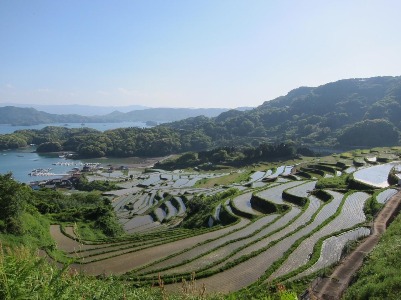 Saga City to Kiyama-cho, Miyaki-gun [Saga Pref.] Shared Transfer ( Cherry Tomato ).