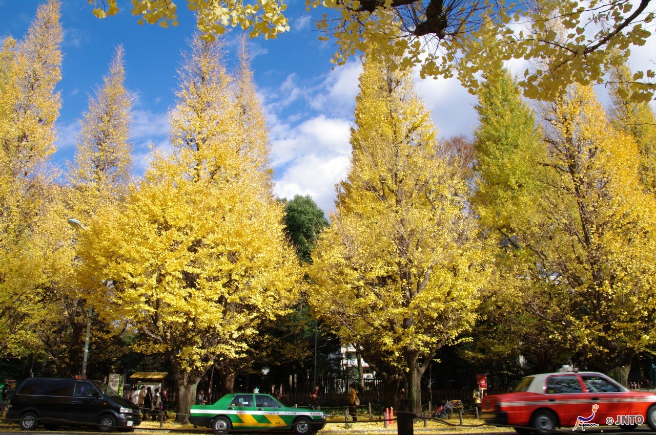 8D7N.Tokyo.Economy. with half day DAISUKI.Tokyo Tour (From Haneda (HND) Airport)**ALPHA MAGIC 20**