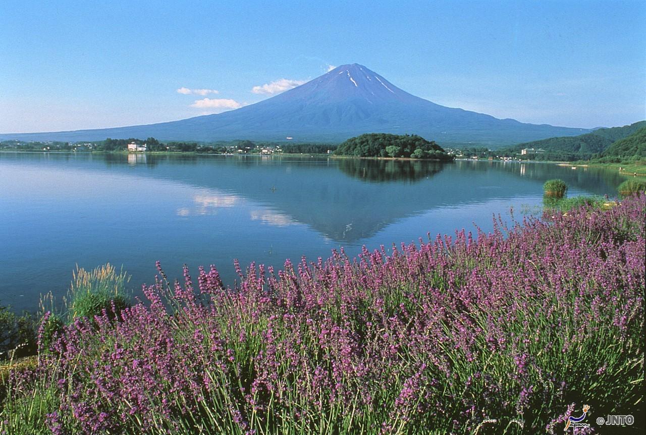 [By Bus Tour]8D7N. Budget Class. Tokyo 2N, Lake Kawaguchi 1N, Takayama 2N & Kyoto 2N.Golden Route (From Tokyo back to Kyoto) **Wai Wai Real Japan