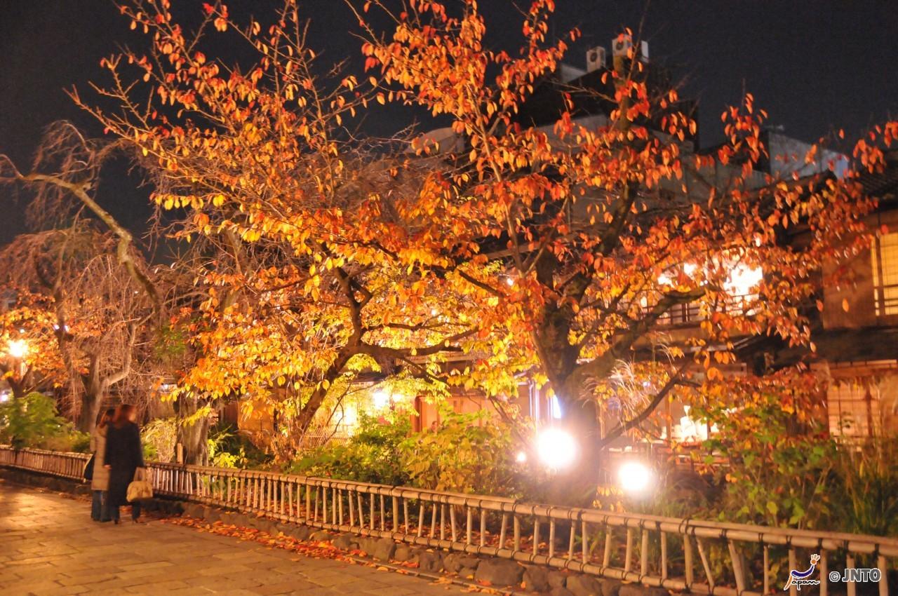 7D6N. Kyoto.Economy.Free & Easy.Kyoto Tour **ALPHA MAGIC 20**