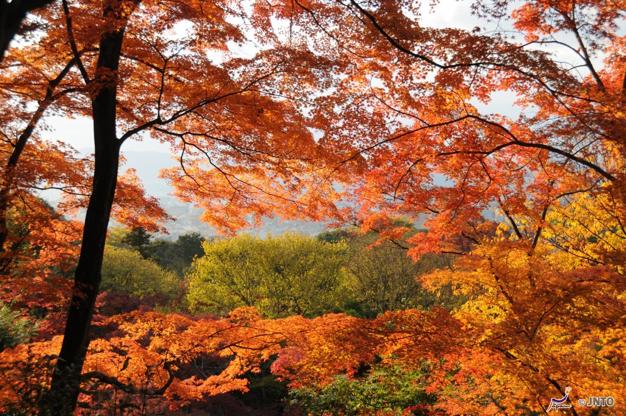 8D7N. Kyoto.Economy.Free & Easy.Kyoto Tour **ALPHA MAGIC 20**