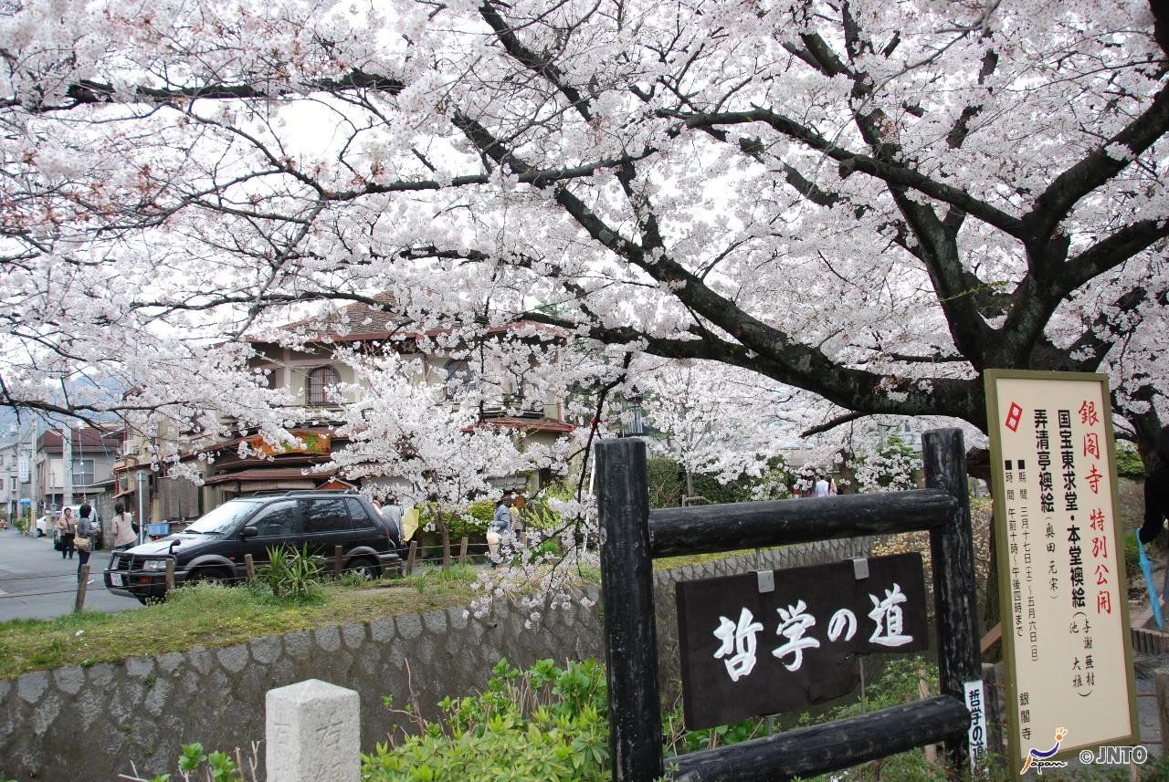 7D6N. Kyoto.Economy.With Kyoto Morning Tour.Kyoto Tour **ALPHA MAGIC 20**