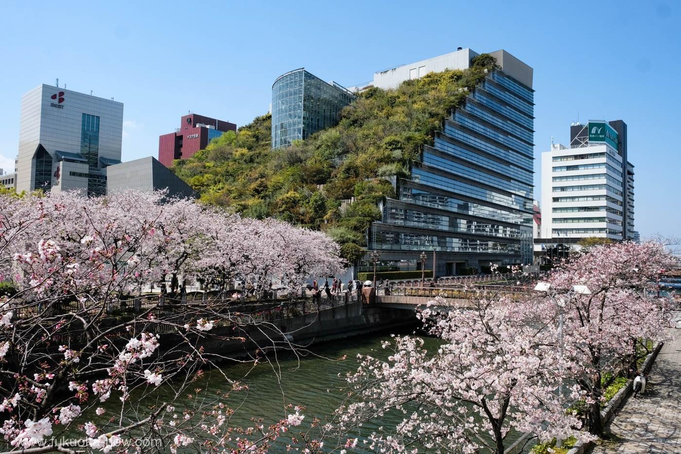 8D7N. Fukuoka.Economy. + Free & Easy **ALPHA MAGIC 20**