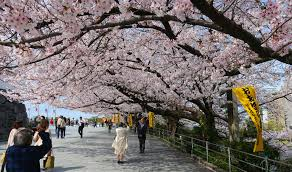 7D6N. Fukuoka.Economy.+ with half day DAISUKI.Fukuoka Tour **ALPHA MAGIC 20**