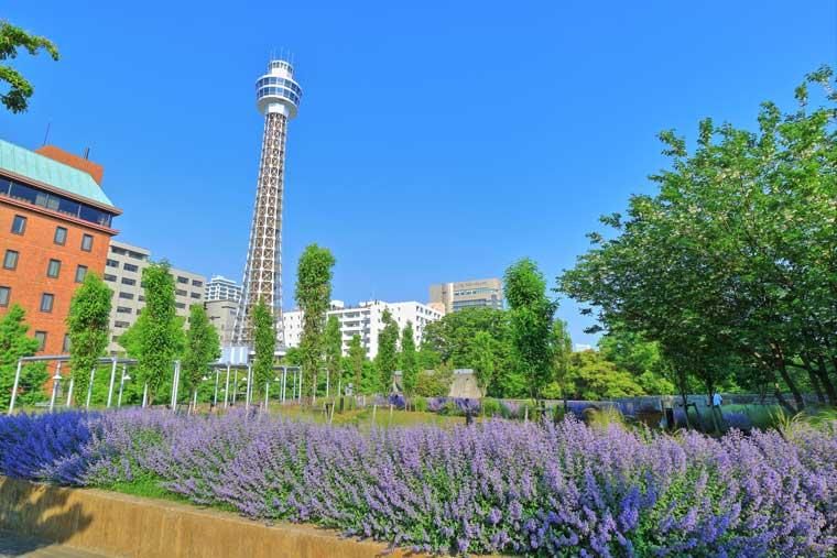 7D6N.Yokohama City.Tourist.Free & Easy. (From Haneda (HND) Airport)* Alpha Magic 20*