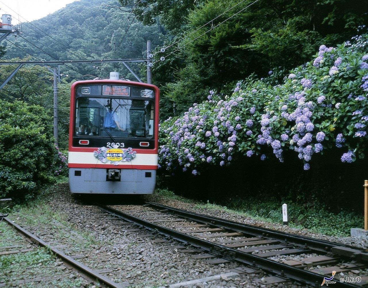 Door2Door transfer within the city. Hakone city ( Cherry Tomato )