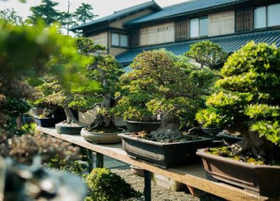 Shunkaen Bonsai Museum Admission Ticket with Round Trip Cherry Tomato SIC Door to Door Transfer (Duration: approx. 04 05 Hrs) **ALInoBABY**