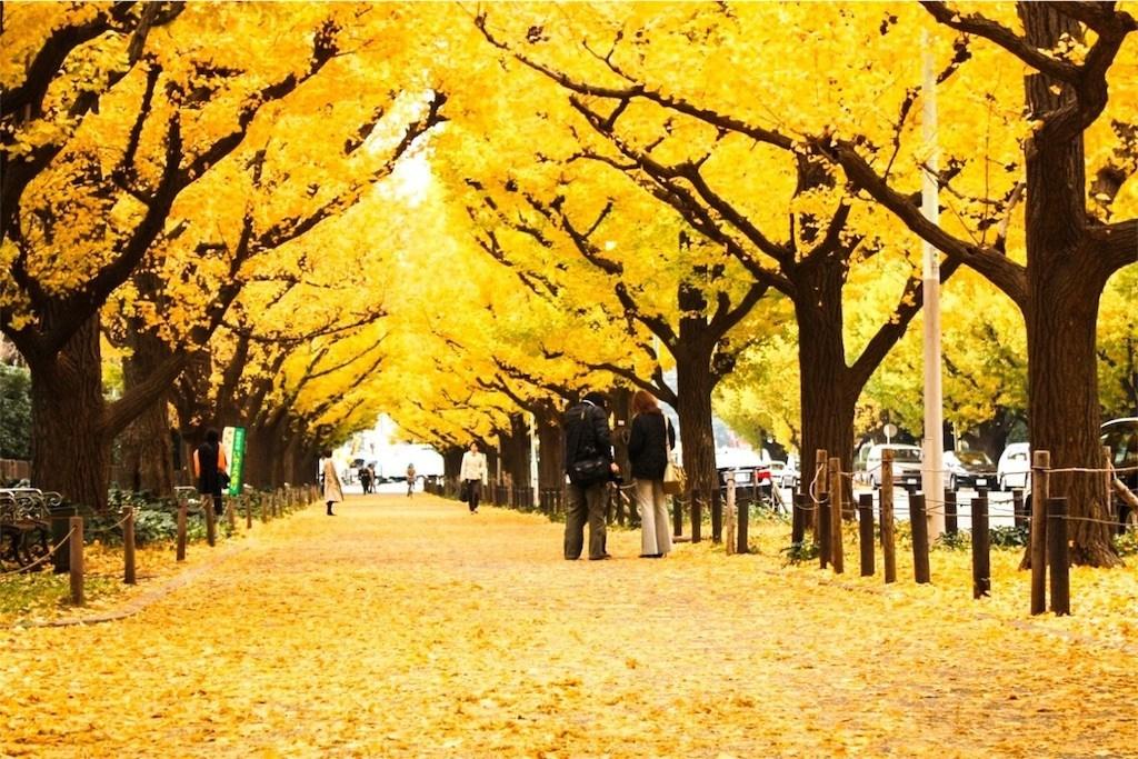 Tokyo Jingu Gaien Icho Namiki Tour with Round Trip Cherry Tomato SIC Door to Door Transfer (Duration: approx. 03-04 Hrs)**ALInoBABY**