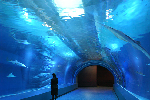 Shinagawa Aquarium included admission Ticket with Round Trip Cherry Tomato SIC Door to Door Transfer ( Duration: approx.03-04Hrs) **ALInoBABY**