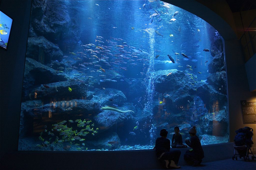 Sumida Aquarium with Admission Ticket with Round Trip Cherry Tomato SIC Door to Door Transfer (Duration: approx. 05-06Hrs) **ALInoBABY**