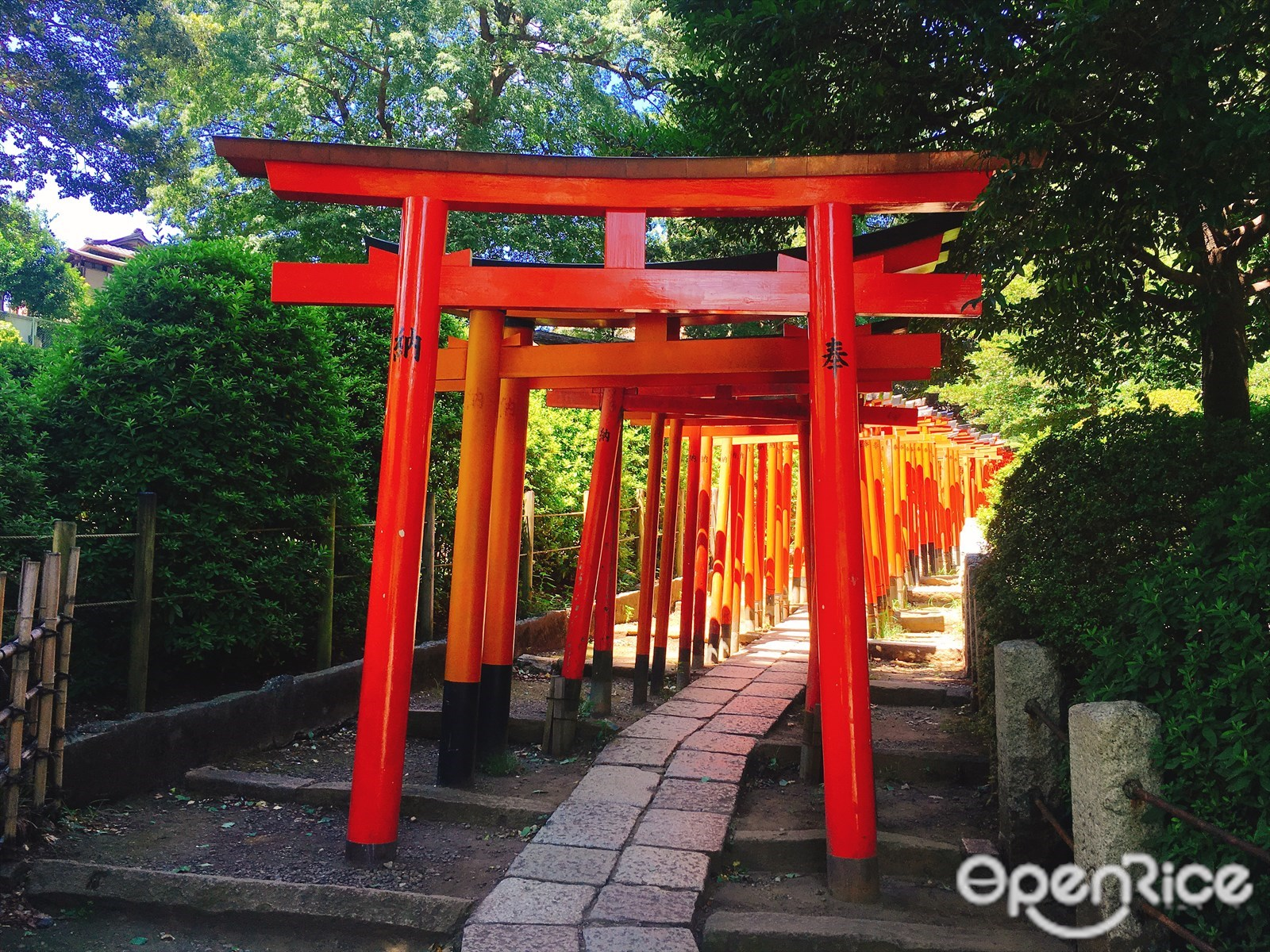 Nezu Shrine + Ginza Shopping District Tour with Round Trip Cherry Tomato SIC Door to Door Transfer (Duration: approx. 07-08Hrs)**ALInoBABY**