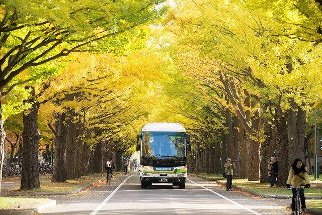 Hokkaido University Ginkgo Avenue with Round Trip Cherry Tomato SIC Door to Door Transfer (Duration: approx. 03-04Hrs) *ALInoBABY*