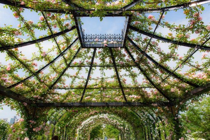 Yokohama Children's Botanical Garden with Round Trip Cherry Tomato SIC Door to Door Transfer (Duration: approx. 04-05Hrs) *ALInoBABY*