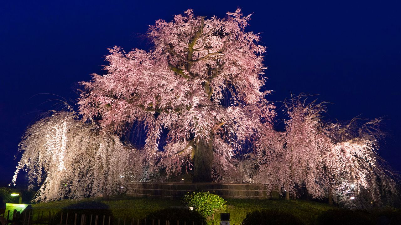 Maruyama Park with Round Trip Cherry Tomato SIC Door to Door Transfer (Duration: approx. 02-03Hrs) **ALInoBABY**