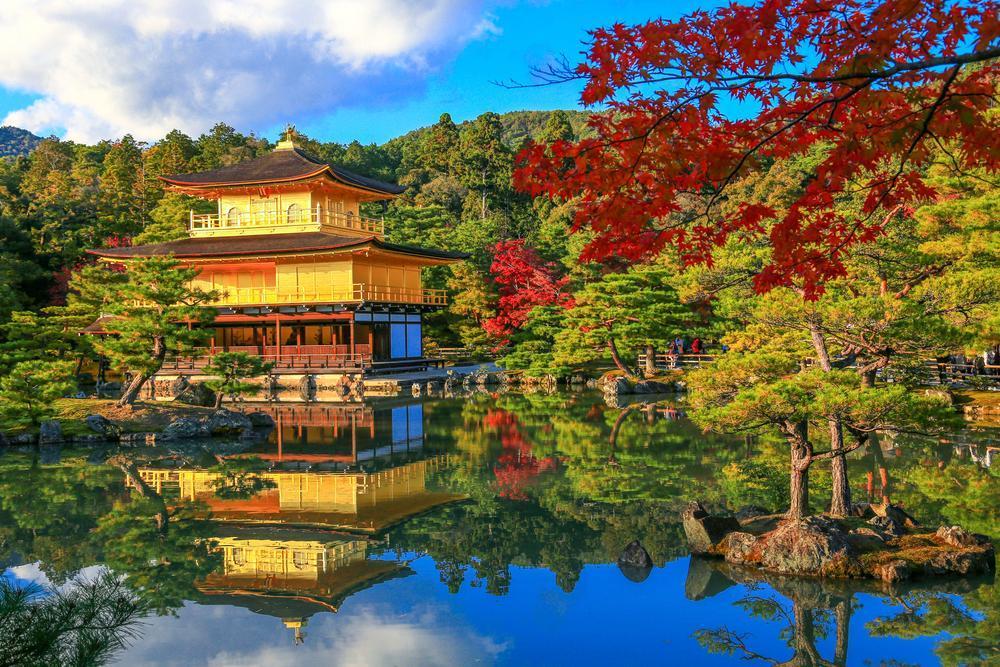 Kinkakuji Temple (Golden Pavilion) with Round Trip Cherry Tomato SIC Door to Door Transfer (Duration: approx. 2.5-3.5Hrs)**ALInoBABY**