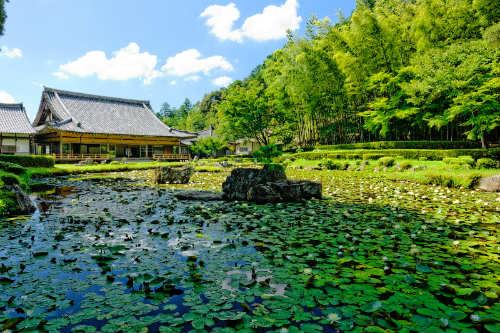 Jyoei Temple Sesshu Garden with Round Trip Cherry Tomato SIC Door to Door Transfer (Duration: approx. 02-03Hrs)**ALInoBABY**